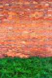 Green bushes on the brick wall background Stock Photography
