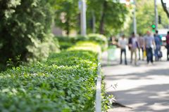Green bushes in city park Royalty Free Stock Photography