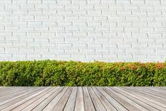 Green Bushes fences at White brick wall. Royalty Free Stock Photography