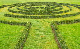 Green bushes Labyrinth Royalty Free Stock Image