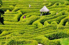 Green bushes labyrinth, hedge maze, Falmouth. Green bushes labyrinth, hedge maze. People search the exit Royalty Free Stock Photo