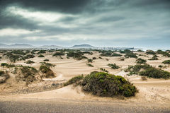 Green bushes in Lanzarote coastal dune Royalty Free Stock Image