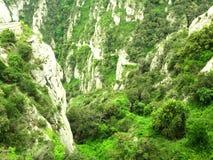 Green bushes on mountainside Royalty Free Stock Photos