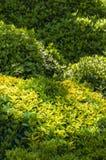 Green bushes Royalty Free Stock Photos
