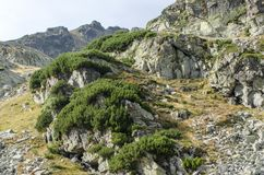 Green bushes in Parang mountains. In a deserted, arid alpine area Stock Photography
