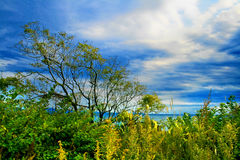 Green bushes by sea. Scenic view of green bushes and trees by sea with blue sky and cloudscape background Royalty Free Stock Images