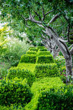Green Bushes & Shrubs in Garden Royalty Free Stock Images
