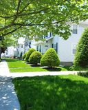 Green bushes in summer day. royalty free stock photography