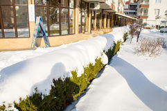 Green bushes under the snow in Pomorie, Bulgaria Royalty Free Stock Image