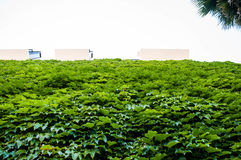 Green Bushes Under White Sky Stock Images