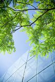 Green business office building Stock Photo