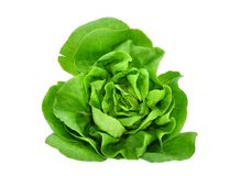 Green butter lettuce vegetable or salad isolated on white royalty free stock photography