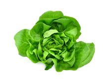 Green butter lettuce vegetable or salad isolated on white. Back ground stock photos