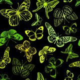 Green  butterflies. Royalty Free Stock Photo