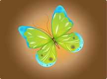 Green Butterfly Stock Photos