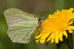 The green butterfly Stock Image