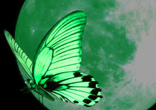 Green butterfly. The green butterfly and moon Royalty Free Stock Photography