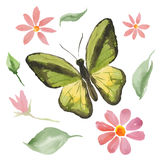 Green butterfly and flowers Stock Images