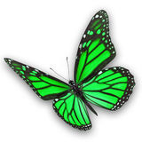 Green butterfly flying Stock Photography