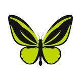 Green butterfly icon, flat style. Green butterfly icon in flat style on a white background Stock Photography