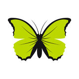 Green butterfly icon, flat style. Green butterfly icon in flat style on a white background Stock Images