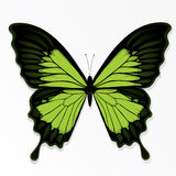 Green butterfly illustration Stock Images