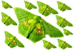 Green butterfly isolated, Clipping Paths. Green butterfly, beautiful of nature isolated on white background, Clipping Paths Stock Image