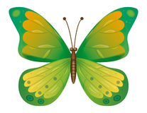 A green butterfly isolated.  EPS10 Vector Stock Image