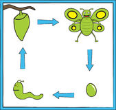 Green butterfly metamorphosis. Represent butterfly life cycle from an egg into a green cute butterfly Stock Images