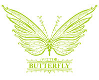 Green butterfly. Stock Photo