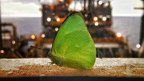 Green butterfly. Butterfly outside window Royalty Free Stock Photos