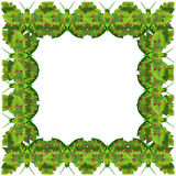 Green butterfly photo frame Royalty Free Stock Image