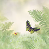 Green Butterfly and Plants Royalty Free Stock Images