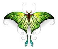 Green butterfly Stock Image