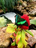 Green butterfly. Sitting on a red flower in the garden stock image