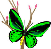 Green Butterfly on Stem. Green and black butterfly on stem with pink and red buds stock illustration