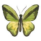 Green butterfly Stock Photos