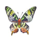 Green butterfly, watercolor illustration Royalty Free Stock Photos