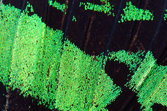 Green butterfly wing Stock Images