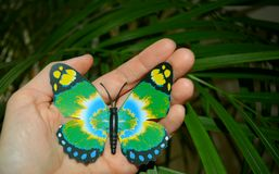 Green butterfy in hand on a green background. Green butterfly symbol earth in hand on a green leaf background Stock Photography