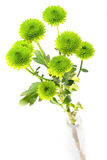 Green button mums in a bottle Royalty Free Stock Photo