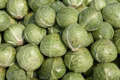 Green cabbage. On the vegetable market Stock Photos