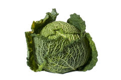 Green Cabbage Stock Image