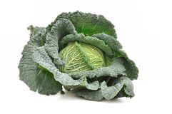 Green cabbage Stock Images