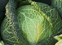 Green cabbage. On a marketplace Stock Photo