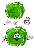 Green cabbage cartoon character with thumb up Stock Image