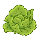 Green cabbage. Cartoon isolated  illustration on white background Royalty Free Stock Photography
