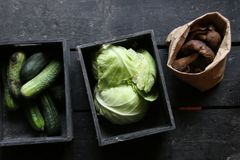 Raw Organic food idea. Green cabbage, Mushrooms and Cucumbers Royalty Free Stock Photography
