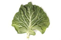 Green Cabbage Leaf Royalty Free Stock Photos