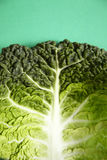Green cabbage leaf Stock Photography